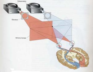 dispositivo tachistoscopico Gazzaniga