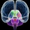 Split brain, storia degli uomini con due cervelli